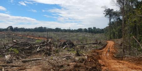 Stop Bulldozing the World´s Most Bio-Diverse Rainforest.