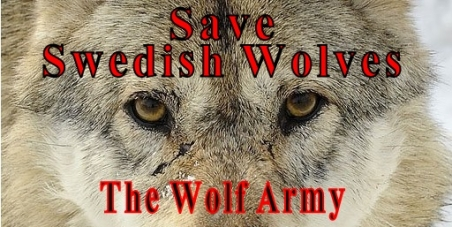 Save Swedish wolves from wolf baiting by using so called hunting dogs.