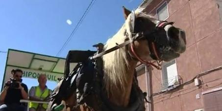 Ayuntamiento de Monforte del Cid: Dejen de esclavizar caballos para las recogidas de basuras.