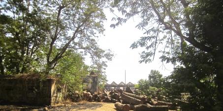 Parem imediatamente o tráfico ilegal de madeira na<br /><br /><br /> Guiné-Bissau!