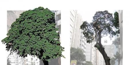 Abaixo assinado contra a derrubada da árvore Assacu na Rua Pompeu Loureiro, em frente ao nº 94 - Copacabana - RJ