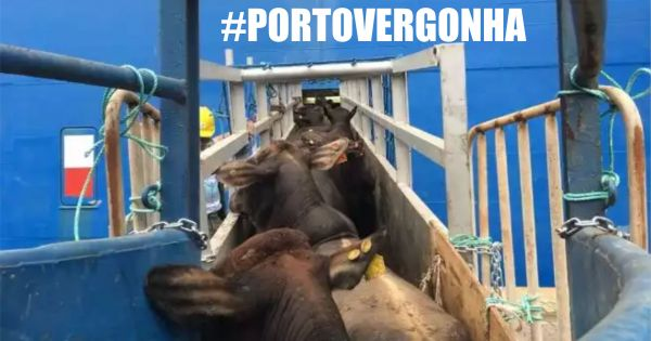 Governador Geraldo Alckmin: Porto Vergonha