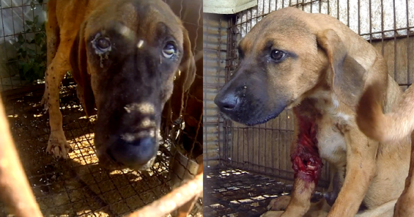 Berlin, Tell Friendship City, Seoul, S. Korea, That We're Opposed to the Torture of Dogs!