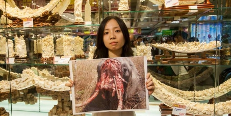Hong Kong Government - Ban Ivory Sales Now!