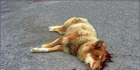 Россия: нет жестокому обращению с бездомными животными!