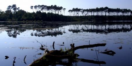 Protection du domaine public d'Abesse (St. Paul-lès-Dax, 40), défense de sa faune, flore, histoire et patrimoine.
