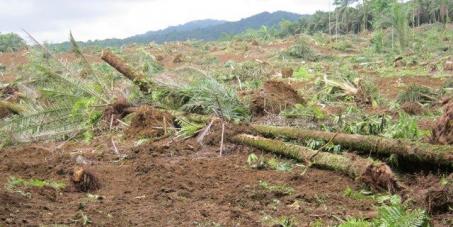 Todos Unidos Contra Desflorestação em São Tomé e Príncipe.