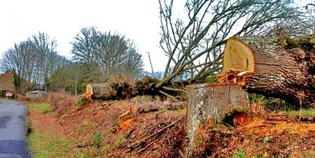 Sauvez les arbres du bord des routes !