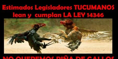 FIRMA PARAR LAS PELEAS DE GALLOS EN TUCUMAN. ARGENTINA TO STOP COCKFIGHTING IN TUCUMAN. ARGENTINA