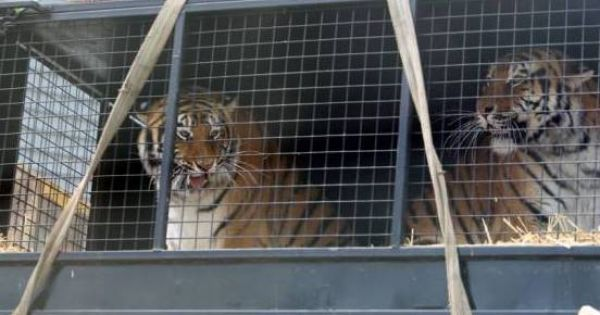 Contre l'exploitation d'animaux sauvages au cirque Zavatta à Mayotte