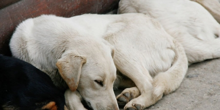 STOP KILLING OUR STRAY DOG AND CATS IN EGYPTS STREETS