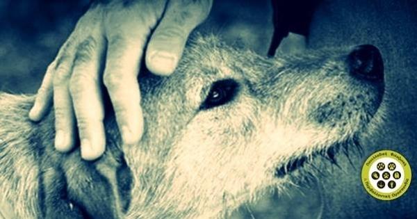 ΟΧΙ στην ευθανασία αδέσποτων ζώων | No toeuthanasia of stray animals