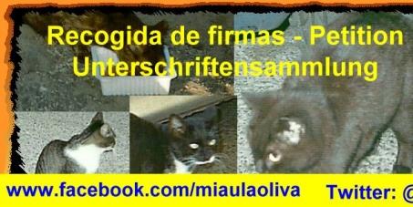 Anular la ley que impide alimentar a los gatos en La Oliva. Deutsch: Siehe Beschreibung. English:see description