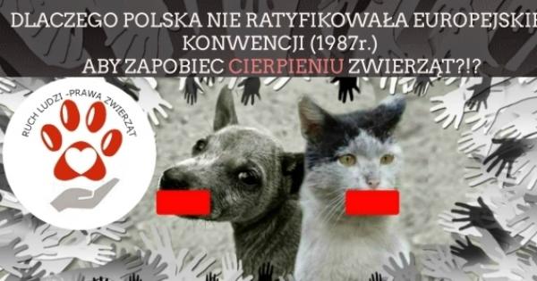 Europejska Konwencja Ochrony Zwierząt Domowych