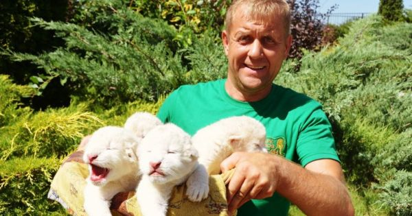 SAVE TAIGAN LION SAFARI PARK IN CRIMEA FROM ILLEGAL TAKEOVER