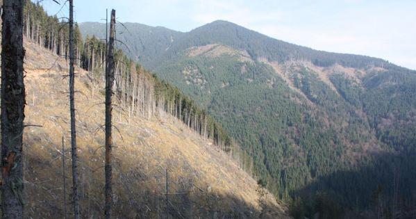 Vrem un Referendum pentru interzicerea exploatarilor forestiere (taierea padurilor)