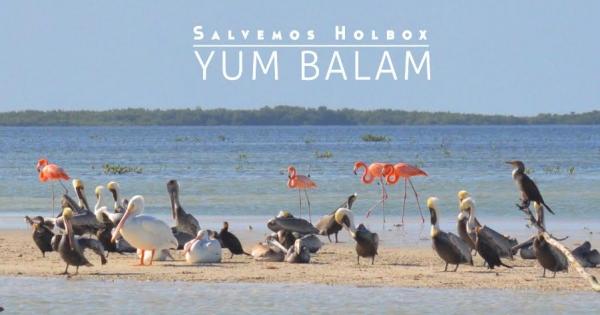 ¡Gracias a tu participación, hoy podemos declarar victoria! El Área Natural Protegida  (ANP) de Yum Balam, que alberga a la isla de Holbox ya cuenta con Programa de Manejo.  Esto será de gran ayuda para proteger y conservar uno de los paraísos rústicos más valiosos del mar Caribe.