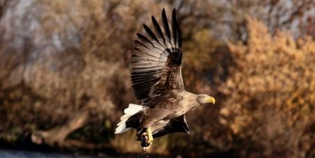 Let us save unique European wildlife in the region of West Pomeranian Voivodship, Poland.