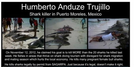 Petition to revoke the shark killing permit issued by SAGARPA in Mexico