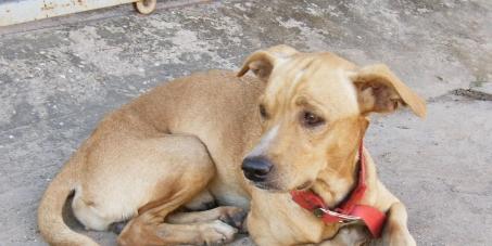 Queremos delegacias de proteção aos animais no Piauí
