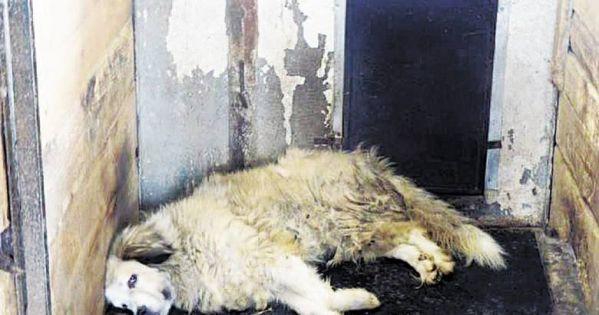 Schronisko Radysy! Tragiczne warunki dla zwierząt! Błagamy o pomoc!!!