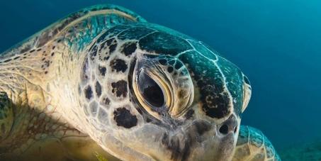 ¡Sí a la pesca sostenible! ¡Salvemos a las tortugas marinas en los mares de Costa Rica!