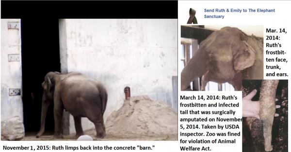 Mayor Mitchell and the New Bedford (MA) City Council: Retire Asian elephant Ruth from Buttonwood Park Zoo NOW!