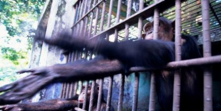 John Scanlon CITES Secretariat : End Great Ape Slavery