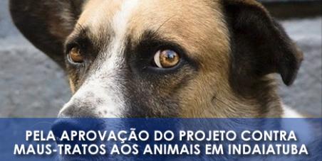 Câmara Municipal: Pela aprovação do projeto contra maus-tratos aos animais em Indaiatuba