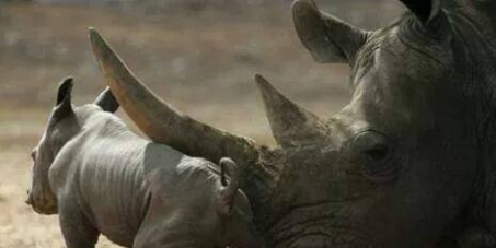 MINISTER MOLEWA AND SANPARKS: THE WORLD CALLS ON YOU TO PROTECT OUR REMAINING RHINOS.