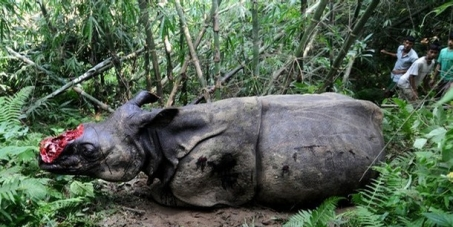 Stop the Rhino Killers