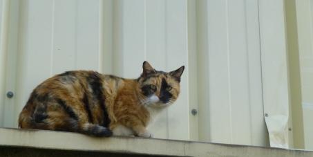 Mairie de Cabrières 34800: Stop à la disparition mystérieuse des chats de Cabrières 34800