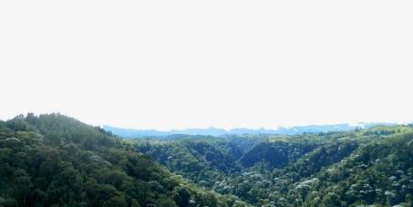 Detengan las torres de energía que amenazan con las aves y el mono aullador en el Eje Cafetero Colombiano