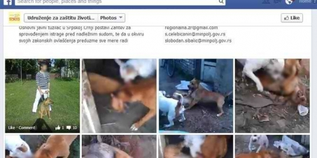 Justice for 2 stray dogs used as bait!!!