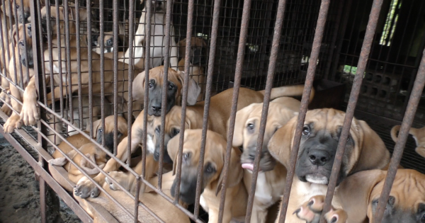 Andong, South Korea, Shut down the illegal dog farms!