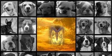 """Maricopa County Attorney Bill Montgomery, Phoenix, Arizona: THE VOICE FOR THE VOICELESS: Justice for """"THE GILBERT 23"""""""