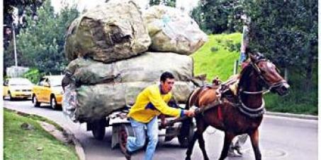 retirar de las calles de cali los caballos que son utilizados como vehiculos de traccion a sangre
