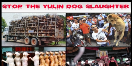 Mr Liu Xiaoming, Chinese Ambassador To The United Kingdom: Stop The Barbaric Yulin Dog Slaughter 'Festival'