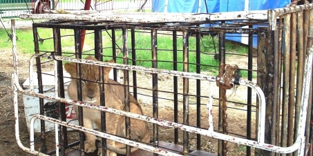 ¡Prohibir los circos con animales en la República de Guatemala!