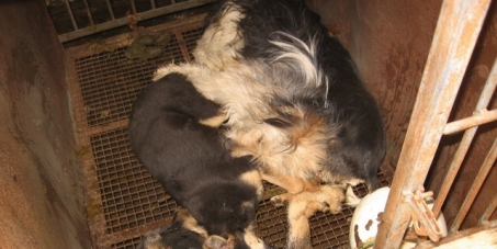 Serbia- Implement Existing Animal Welfare Legislation To Protect Strays