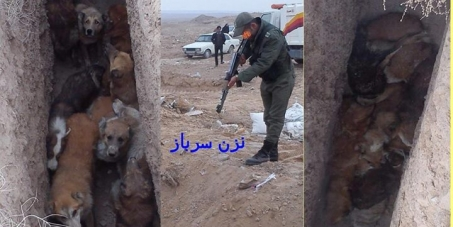 Iran government: Stop killing dogs