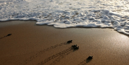 Save the Last Turtle Sanctuaries in Lebanon-Declare them Protected & May 5th Sea Turtles National Day