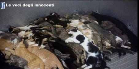Petizione contro le concerie scoperte in Svizzera che vendono pelle di gatto