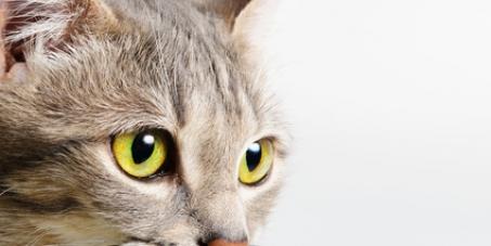 Appliquer la Loi contre les actes de cruauté envers les animaux en Nouvelle-Calédonie