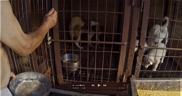 Sangju, South Korea, Shut down the illegal dog farms!