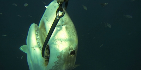 KwaZulu-Natal Sharks Board: Ban Drumlines & Shark Nets in South Africa