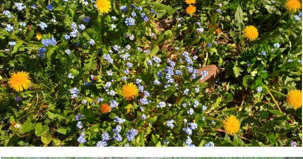 Apel o niekoszenie trawników w Radomiu