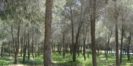 Δήμαρχο και Δημοτικό Συμβούλιο Αγλαντζιάς, Κύπρος: ΚΙΝΔΥΝΕΥΕΙ ΤΟ ΔΑΣΟΣ ΑΘΑΛΑΣΣΑΣ