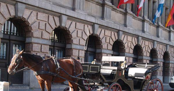 Denk diervriendelijk en help mee de toeristische paardenkoetsen te bannen uit Belgische steden.