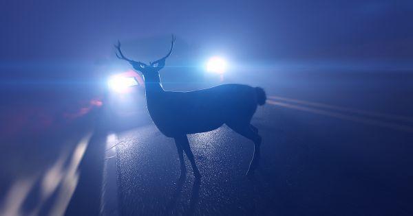 Reduza a morte de animais (Silvestres e Domésticos) nas rodovias e ferrovias brasileiras